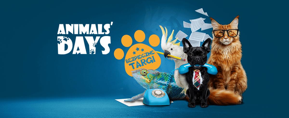 Animals' Days – zaczynamy przygotowania!